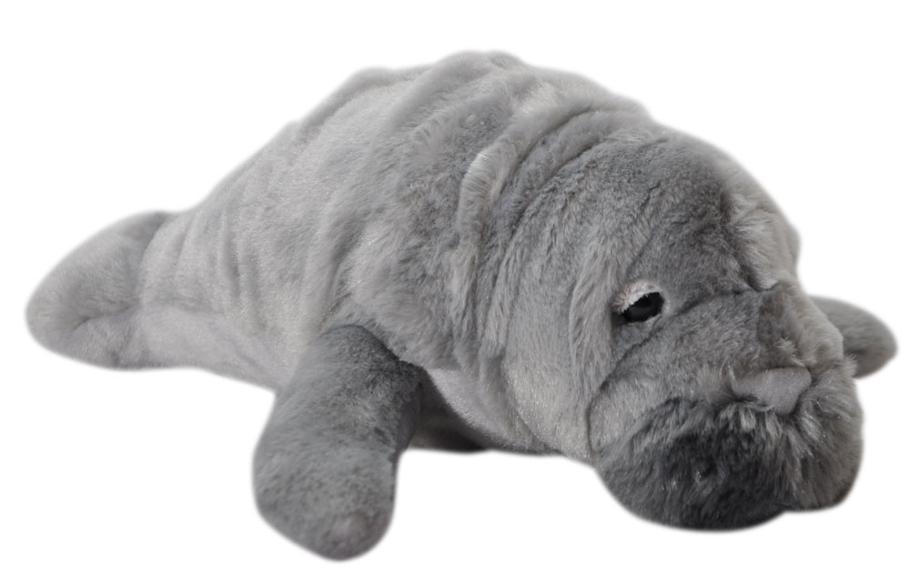 The Petting Zoo: Conservation Manatee